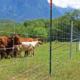 perimetral bovino